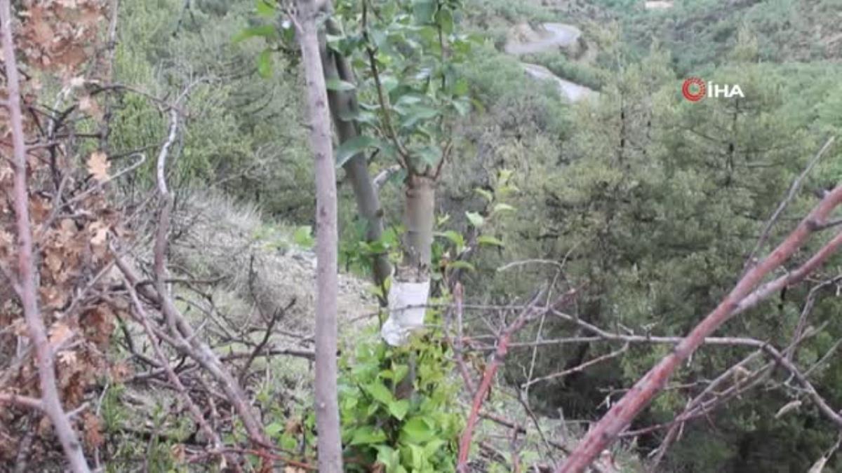 Kendini doğaya adayarak iki yılda 200 yabani meyveyi aşıladı